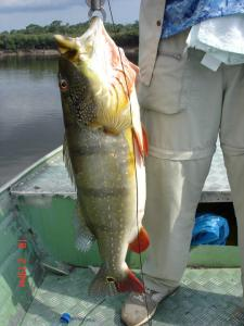 brazil-amazon-peacock-bass-fishing-gallery-22