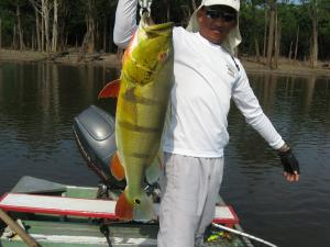 brazil-amazon-peacock-bass-fishing-gallery-23